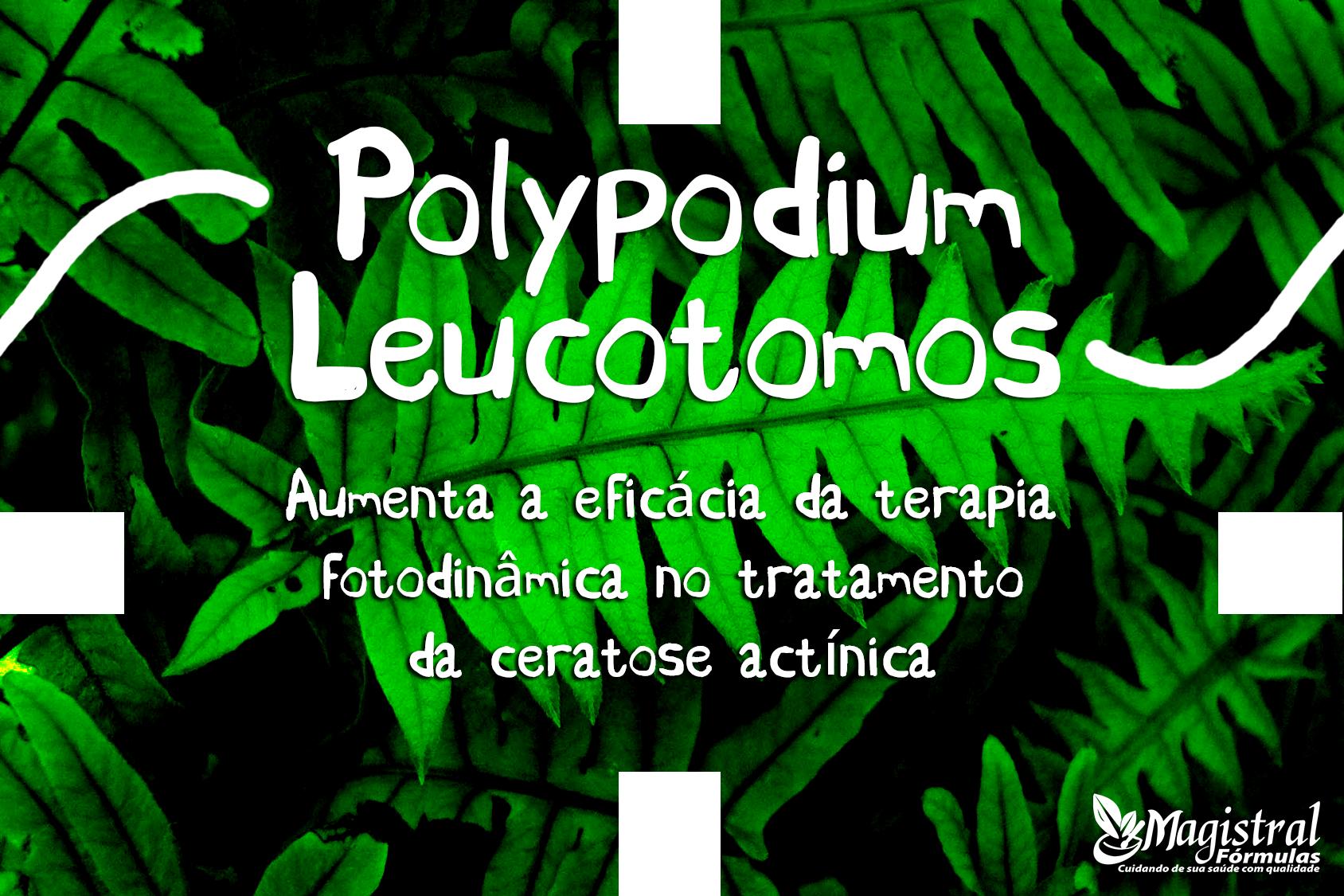 polypodium